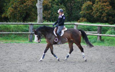 Stage de travail du cheval avec Yann Desmonts