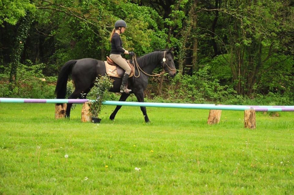 L'équitation en licol, dans quel but ?
